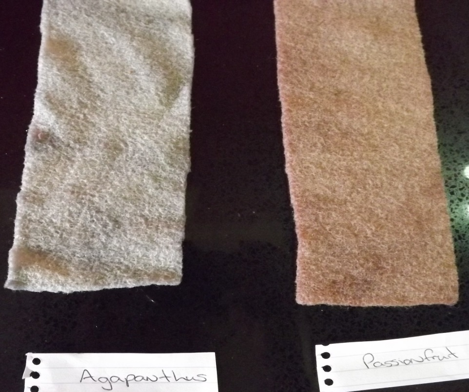 8 wool samples wet - Agapanthus, passionfruit
