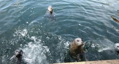 Marine_visitors_to_Fishermans_Wharf