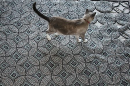 Cat_elusive_grey_rug_designed_&_hooked_by_Ann_Nickle_Bellingen_NSW_Australia_5816